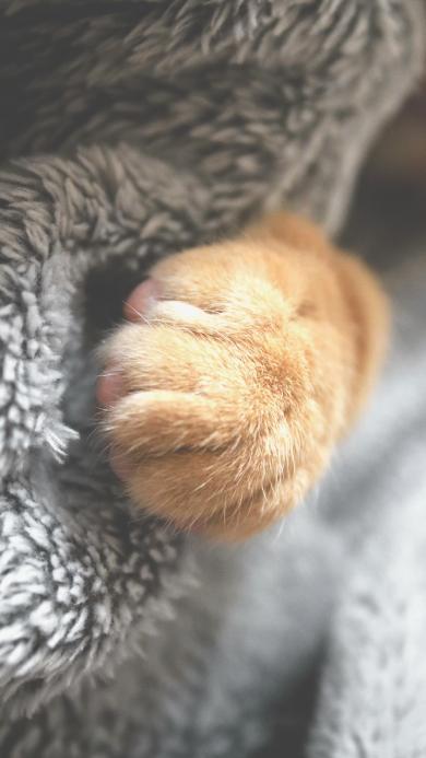 猫爪 猫咪 可爱 毛毯 爪子