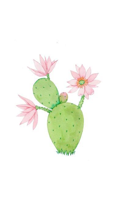 仙人掌 热带植物 花 插画