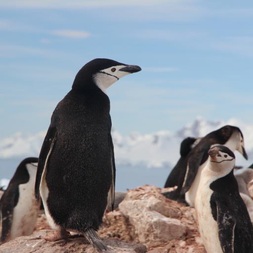企鹅 南极 可爱 萌