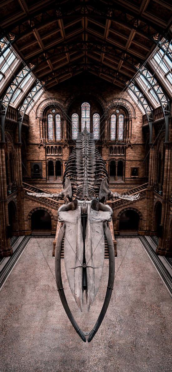 博物馆 动物 骨架 悬挂 展览