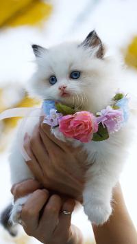猫咪 白猫 可爱 萌 宠物 喵星人