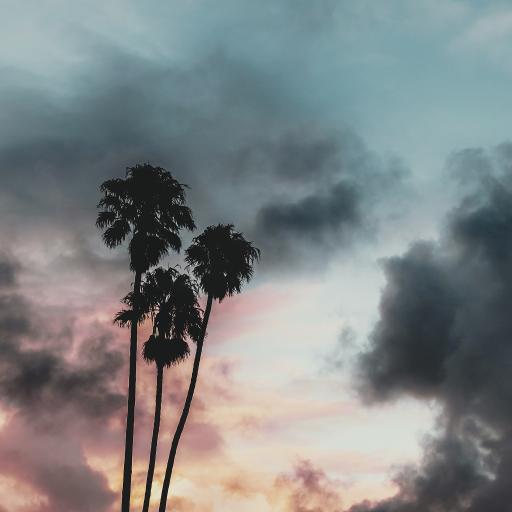 椰树 云层 彩霞 天空