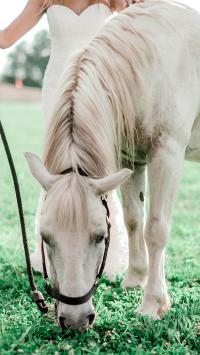 白马 驹 草坪 吃草
