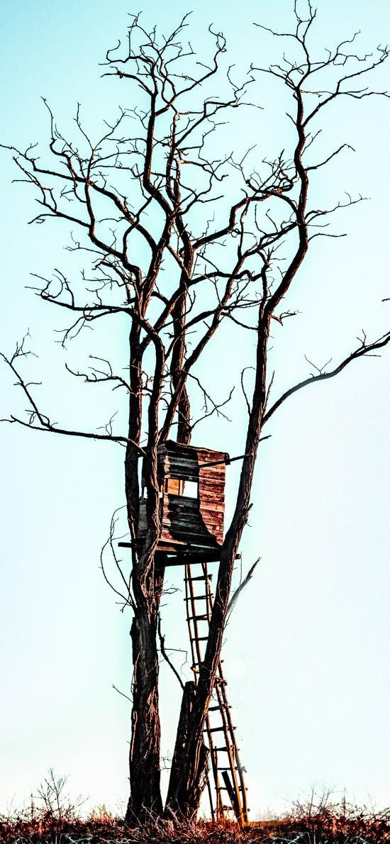 树干 树屋 爬梯 木屋