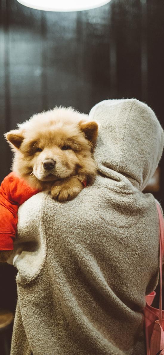 背影 松狮犬 宠物狗 幼犬