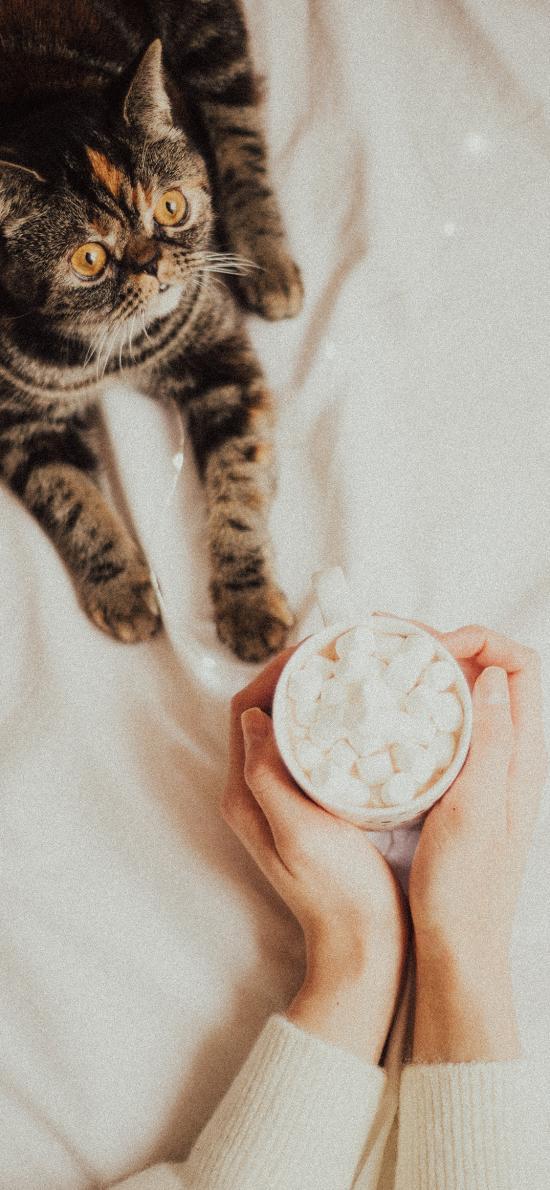 貓咪 寵物 棉花糖 馬克杯