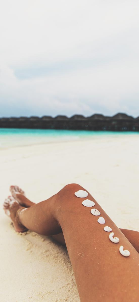 海水 沙滩 长腿 贝壳 风景
