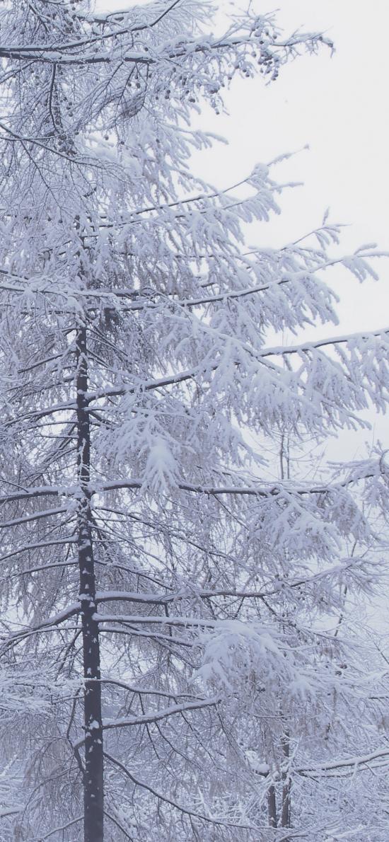 冬季 樹木 雪 寒冷