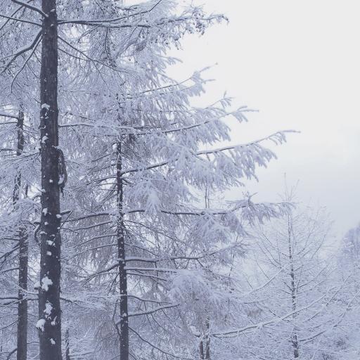 冬季 树木 雪 寒冷