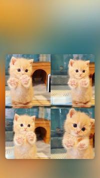 猫咪 可爱 四宫格 奶猫