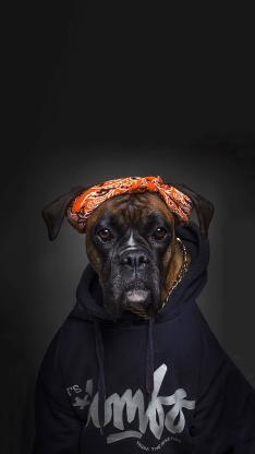 宠物狗 写真 卫衣 头巾 滑稽