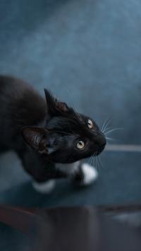 黑猫 猫咪 喵星人 宠物