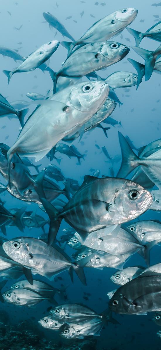 深海 鱼群 海鱼 游动