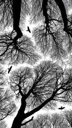 树木 枝干 黑白 鸟