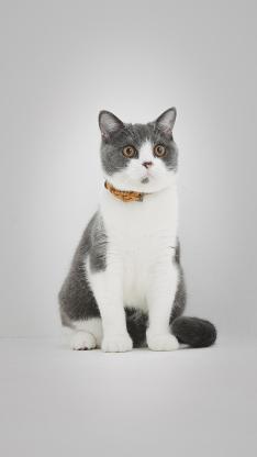 猫咪 喵星人 宠物 可爱 萌
