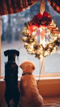宠物狗 花环 圣诞 装饰 背影 窗台