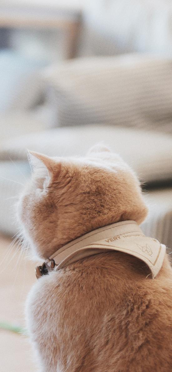 猫咪 项圈 背影 室内