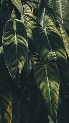 叶子 绿色 密集 绿化 植被