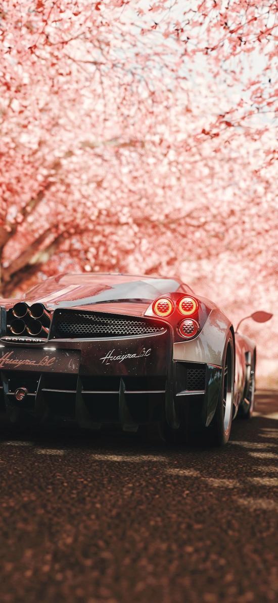 跑车 炫酷 樱花 道路