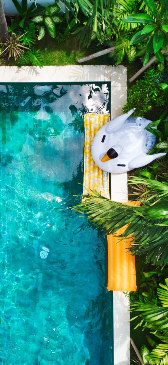 航拍 泳池 泳圈 天鹅