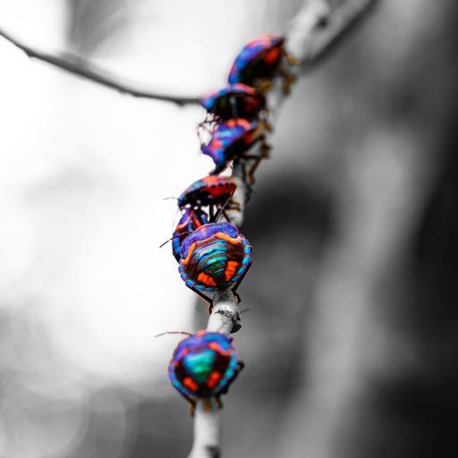 甲虫 昆虫 树枝 外壳