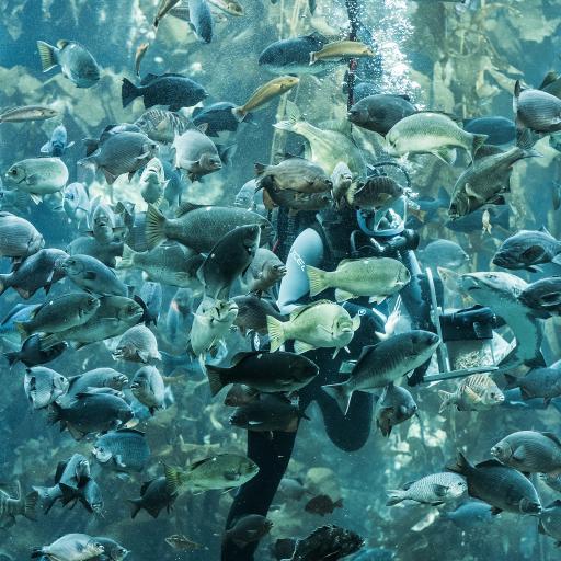 水族馆 海洋生物 潜水员 饲养