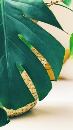绿植 枝叶 龟背竹 绿叶