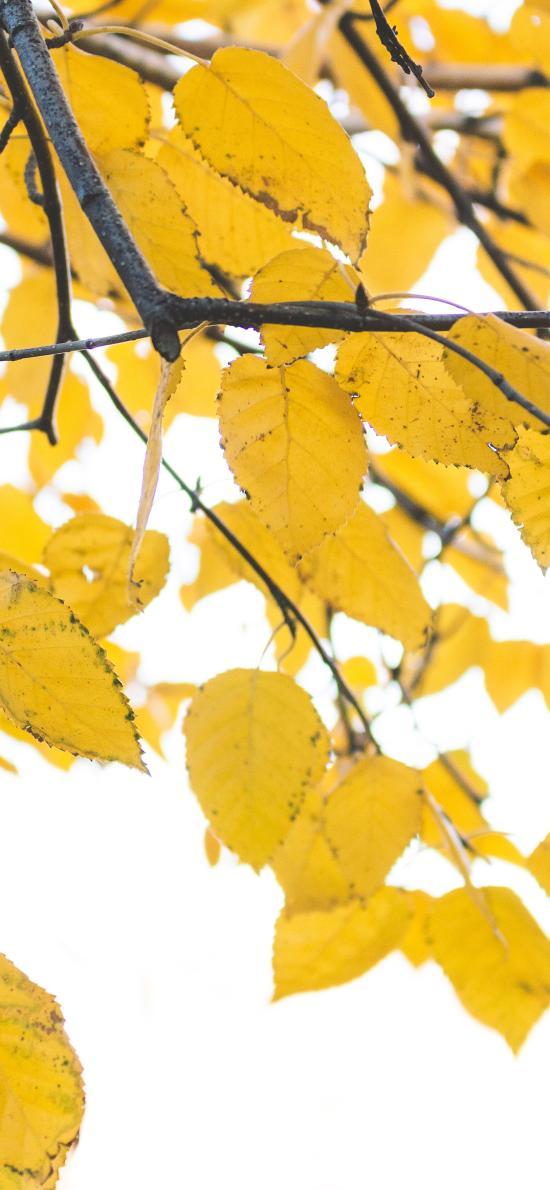 樹葉 枯黃 秋季 茂密