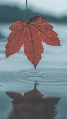 湖泊 枫叶 红色 水波纹