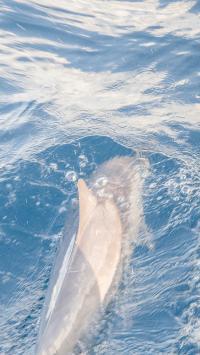 海豚 游泳 蓝色 海洋生物 海水