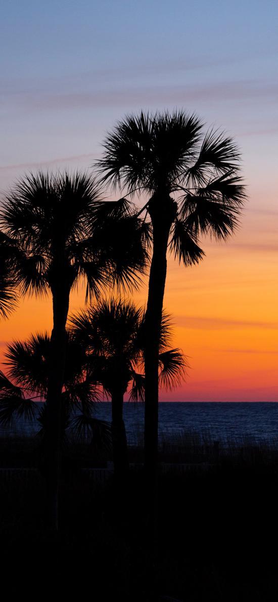 海景 夕阳 椰树 唯美