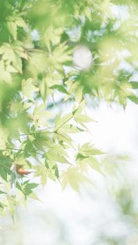 树木 树叶 清新 绿化