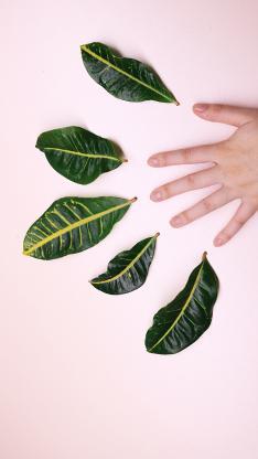 树叶 枝叶 手掌 叶子