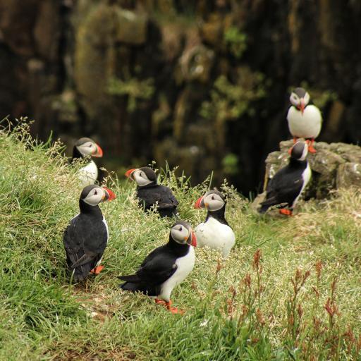 鸟类 北极海鸥 海鸟 草地