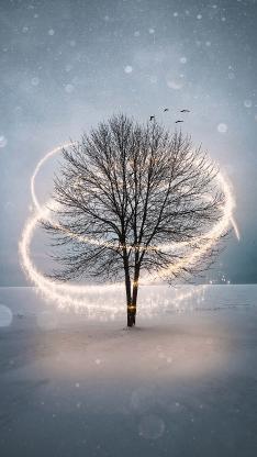 树木 光线 雪地 飞鸟