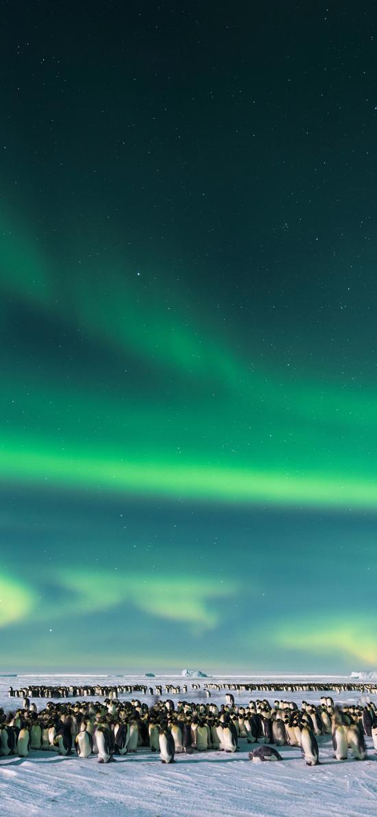 南极 极光 企鹅 雪地