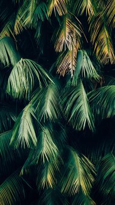 叶子 绿色 绿化 植被 针叶