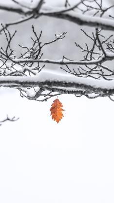 树枝 积雪 枯叶 枯黄 凋零