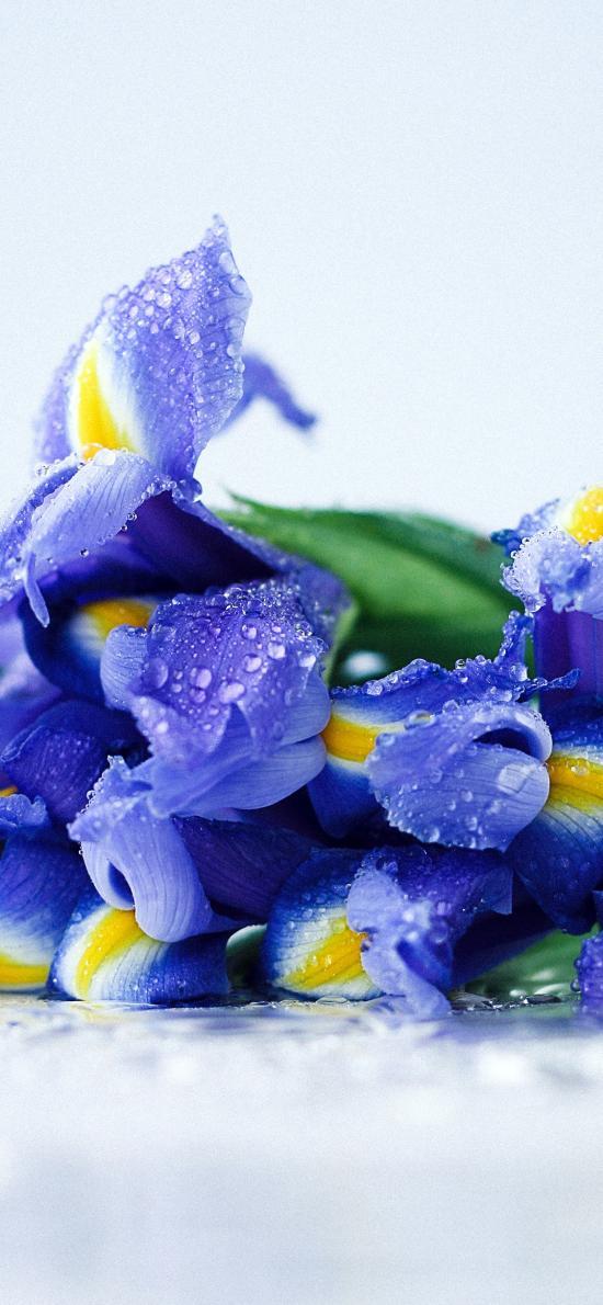 蝴蝶兰 鲜花 水珠 花束