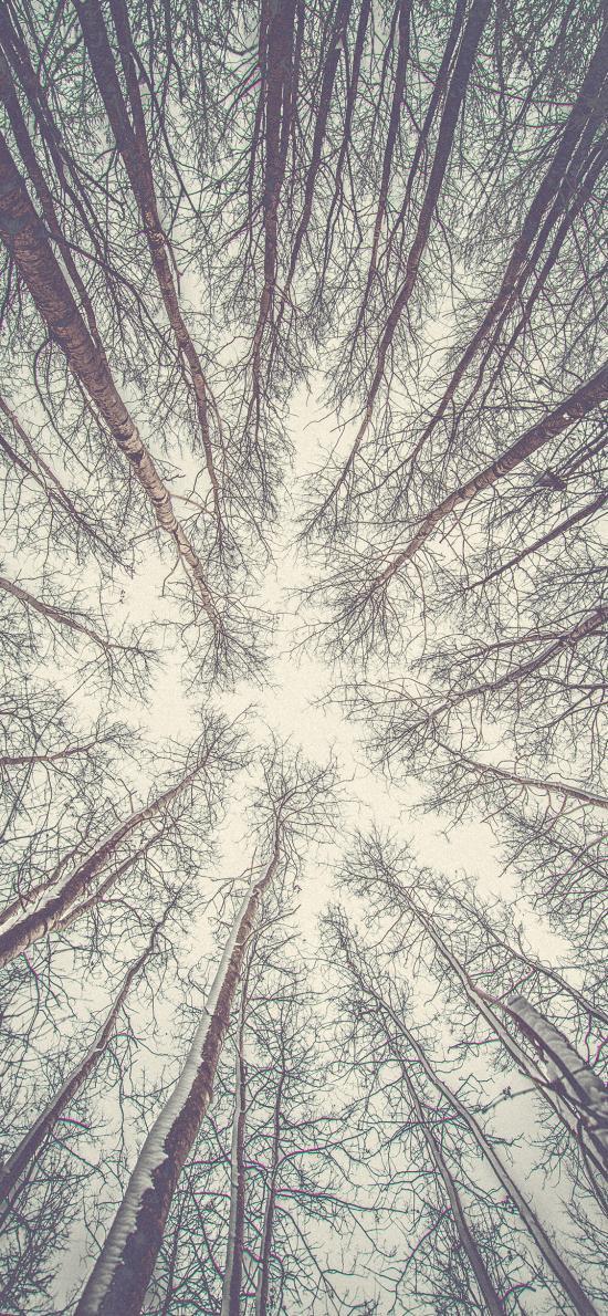 树木 枝干 仰视 树林