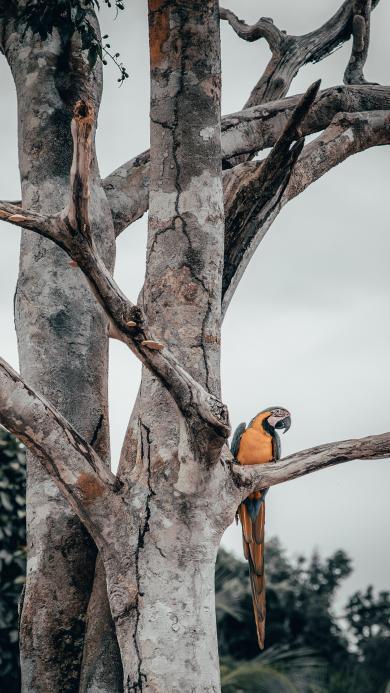鹦鹉 鸟类 树干 羽毛