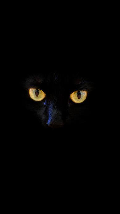 猫咪 喵星人 黑猫 犀利