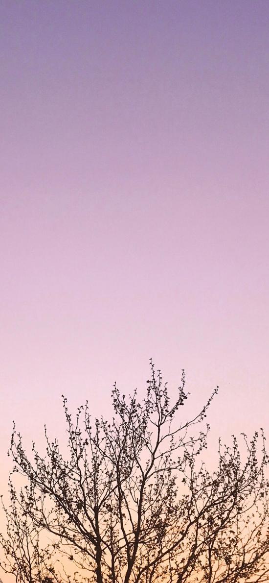 樹冠 枝葉 枯萎 天空 漸變