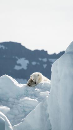 冬季 冰山 北极熊 睡觉 雪白