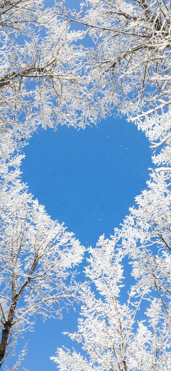 爱心 爱情 浪漫 树木 冬季