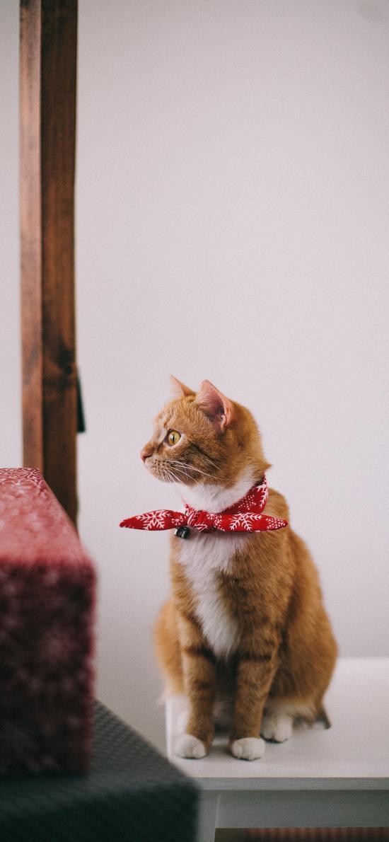 猫咪 喵星人 宠物 萌 可爱