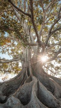 树木 大暑 树干 阳光