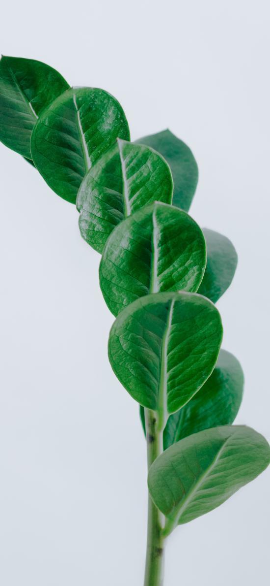 枝叶 绿叶 装饰 生长