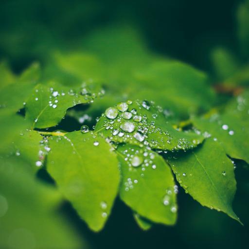 枝叶 绿叶 露珠 绿化