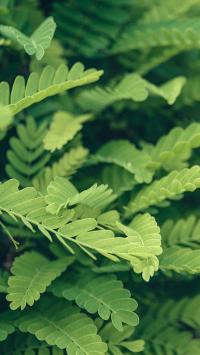 叶子 绿色 植被 绿化